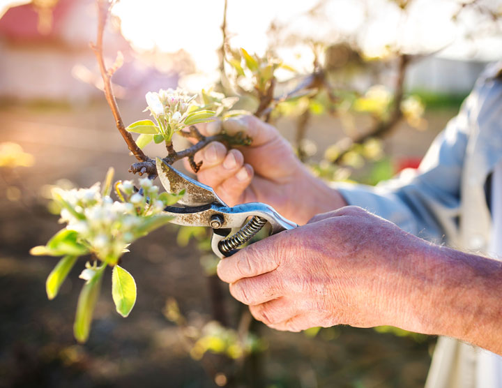 Premier Tree Fruit Tree Pruning in Boise