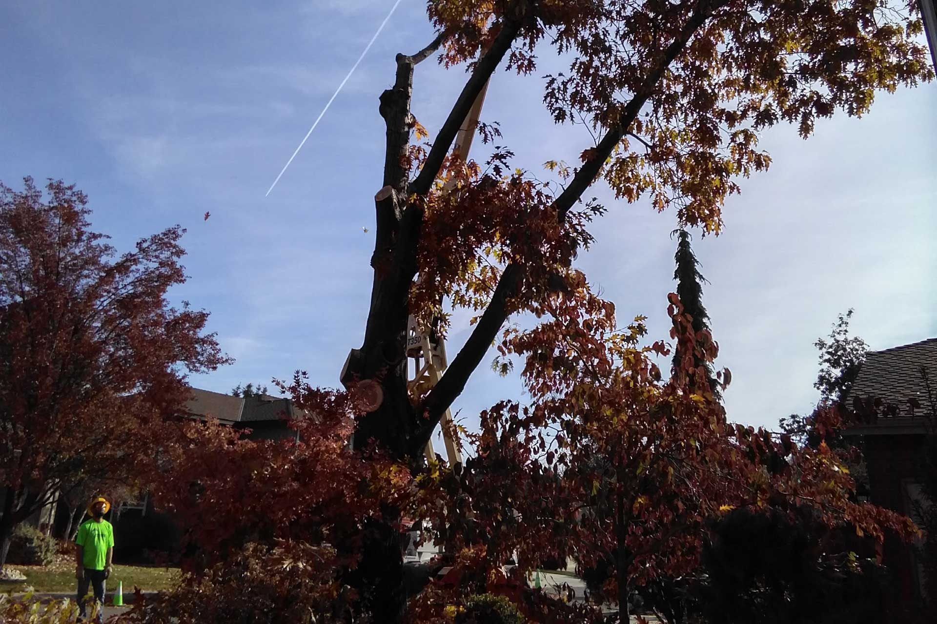 Tree removal and landscape reduction in Boise, Idaho