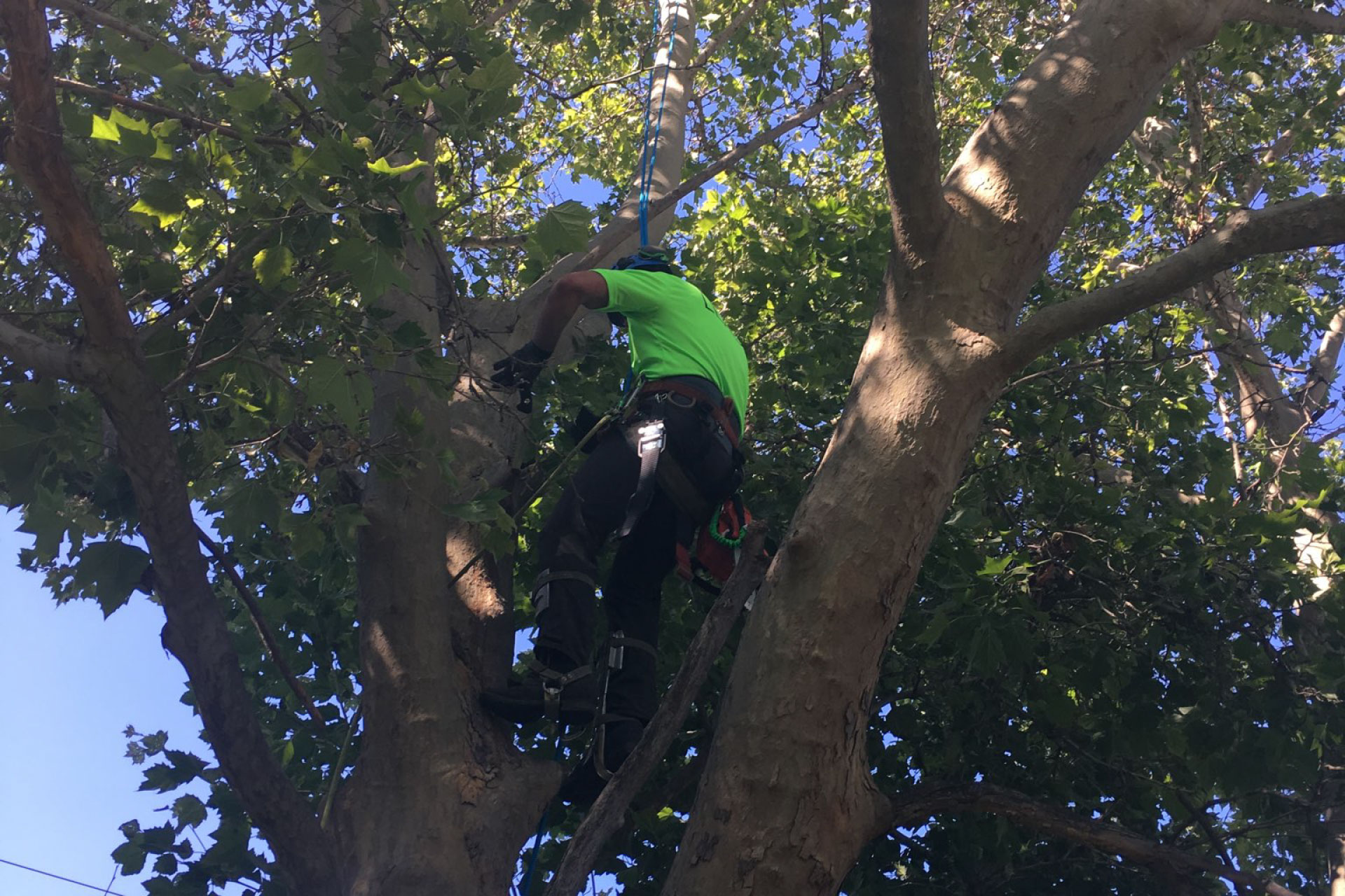 Premier Pruning and Trimming in Boise