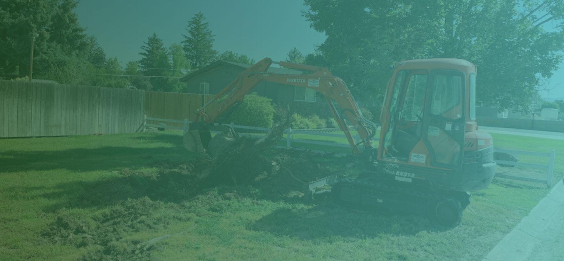Tree Trimming Boise Tree Removal Boise Boise Arborist